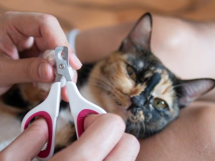 Como cortar as unhas a um gato: mulher a cortar unhas a felino com uma tesoura apropriada