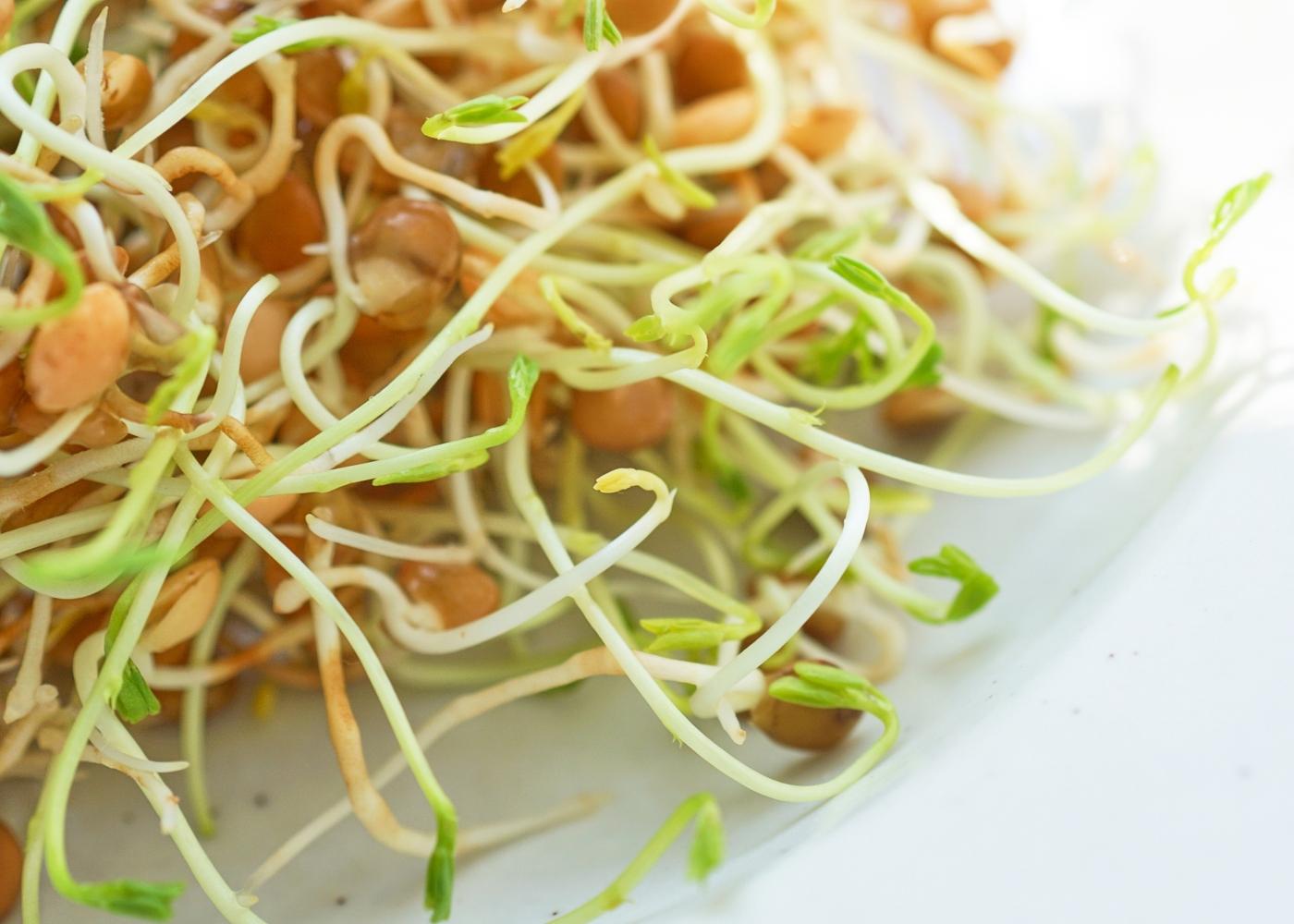 Salada de rebentos e feijão-mungo