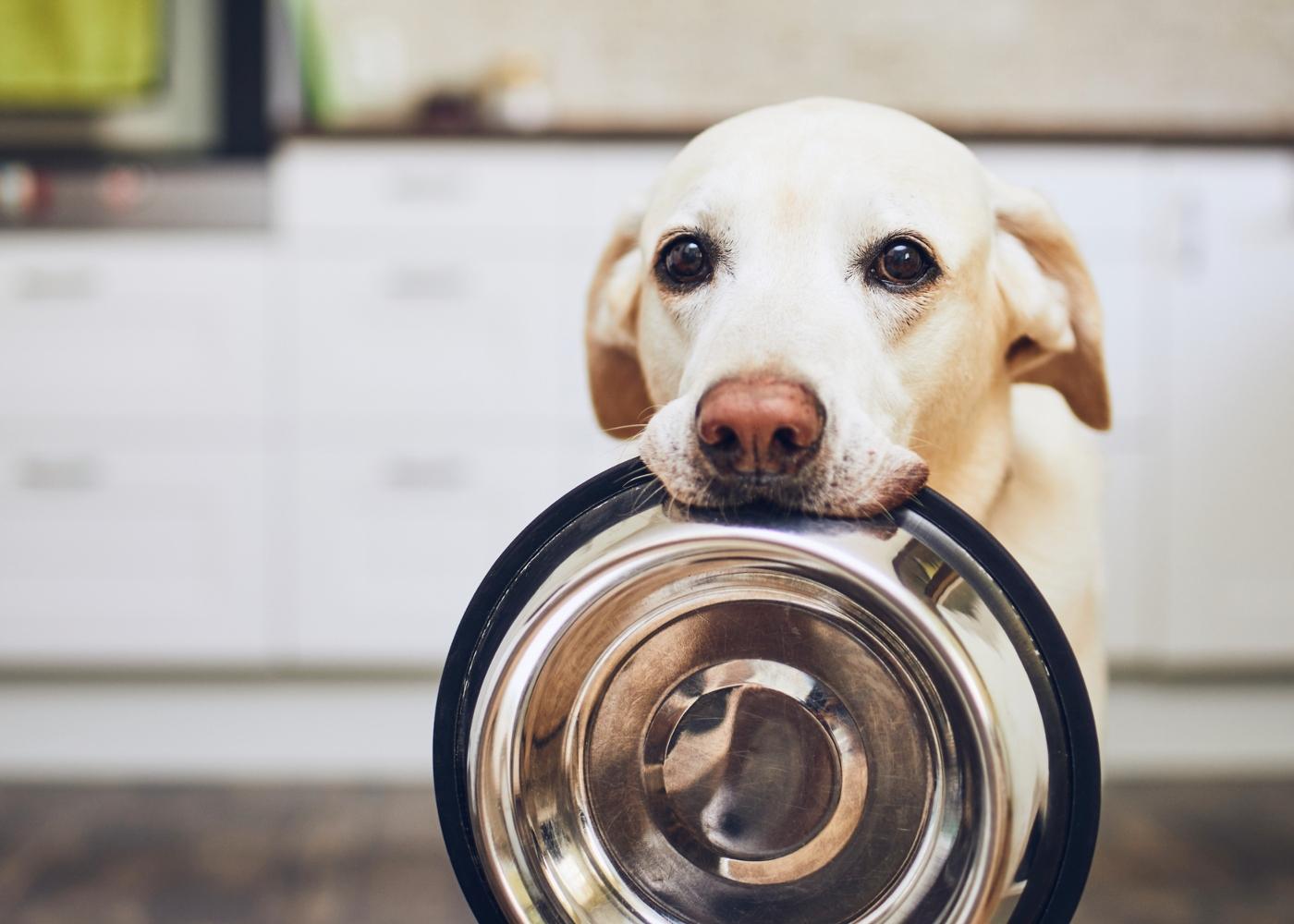 Cão com gamela da comida na boca