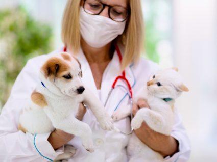 Como interpretar análises clínicas de cães e gatos