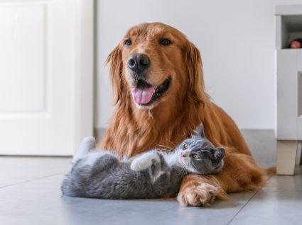 Crime de morte de animal de companhia: cão e gato a brincar em casa