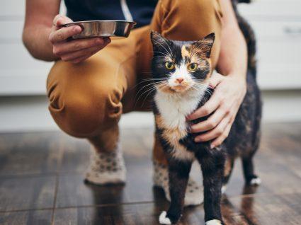 Tutora a alimentar gato vegetariano