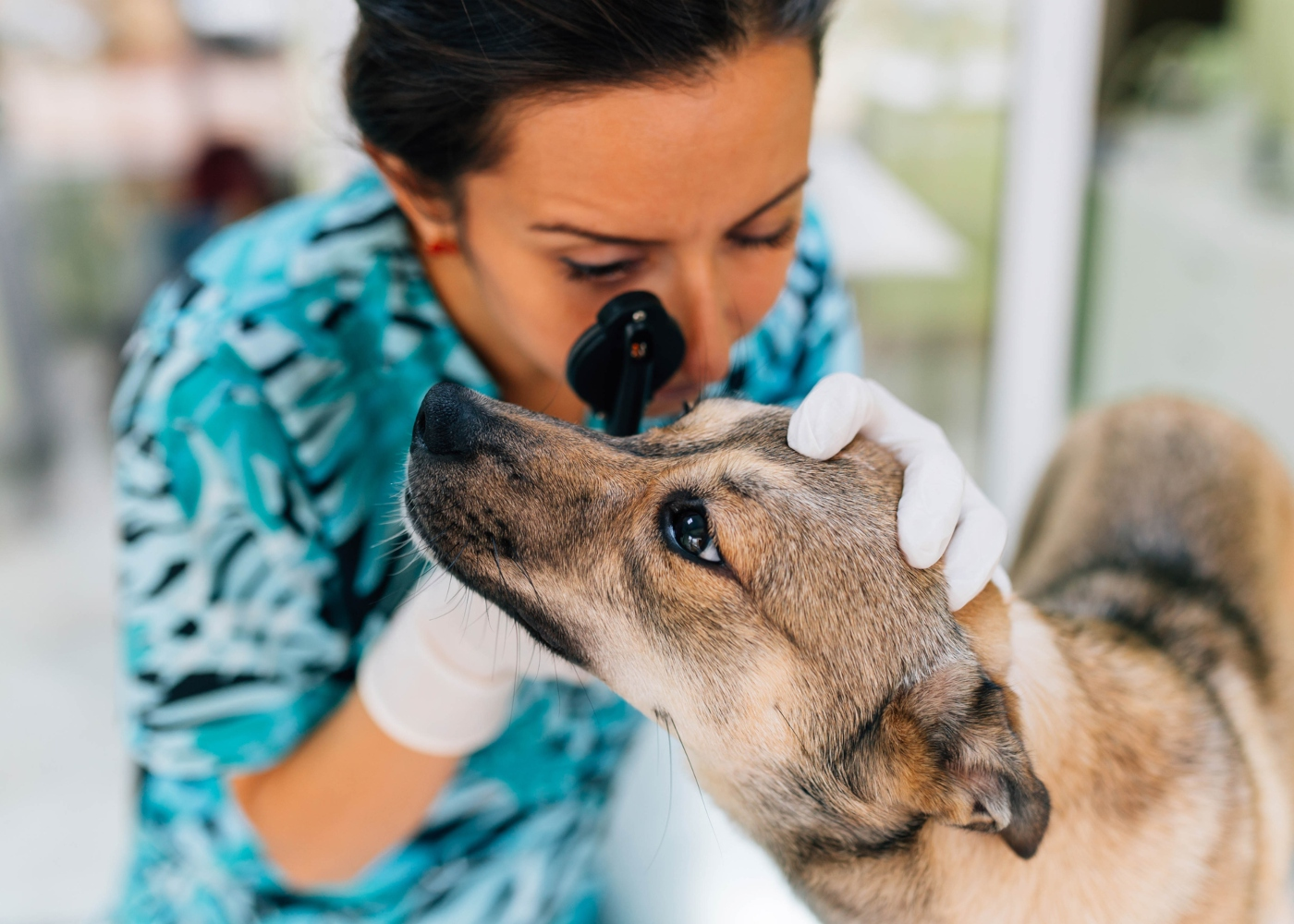 Veterinária a examinar olhos do cão