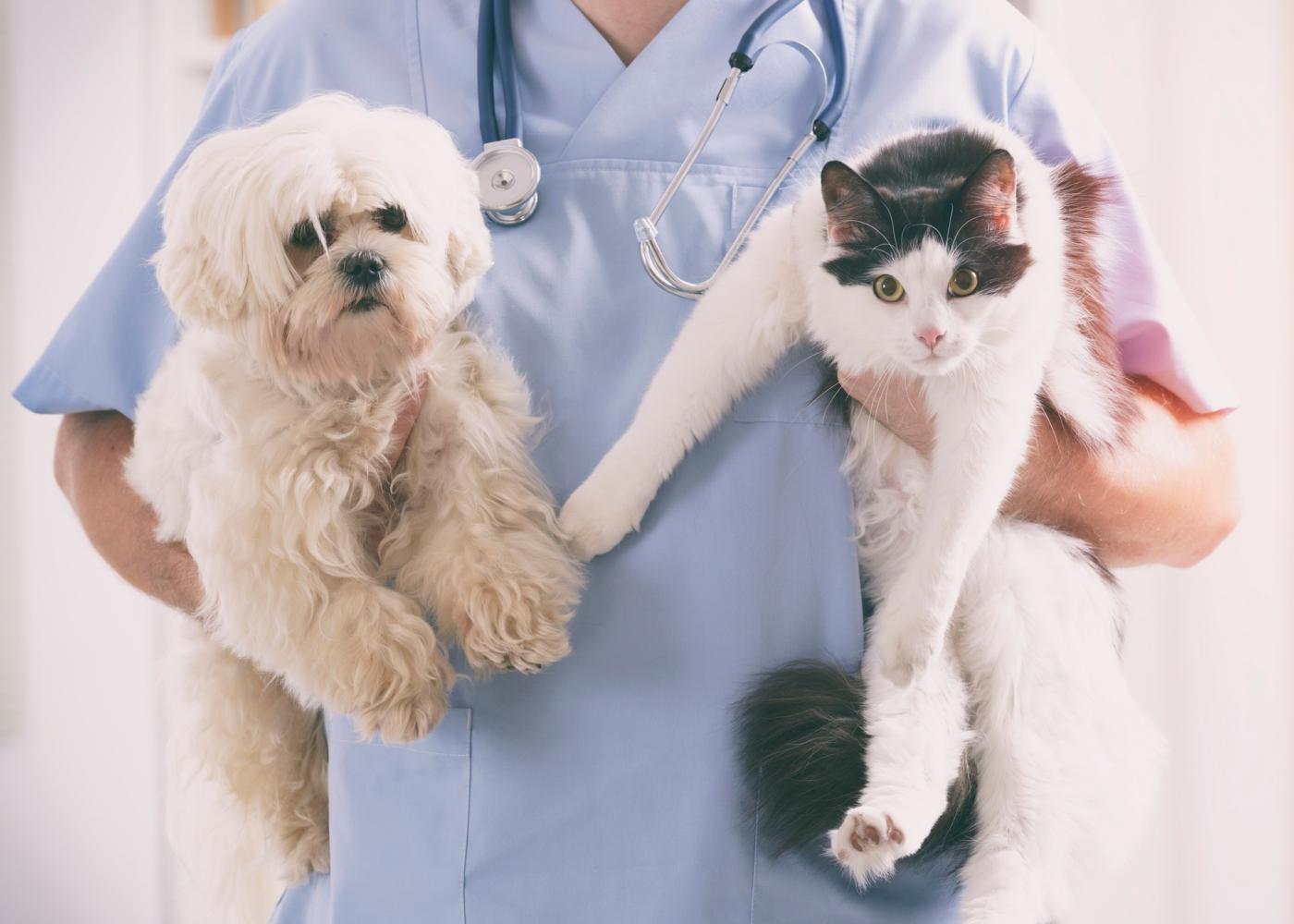 Veterinário com cão e gato ao colo