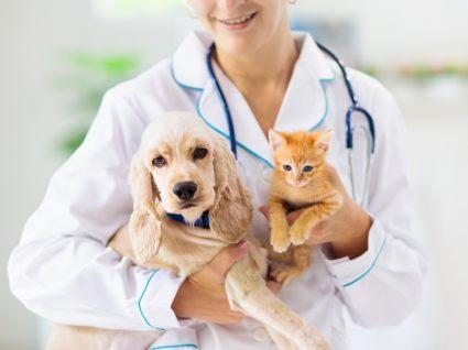 anestesia para cães e gatos