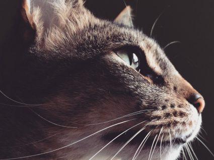 Cães e gatos têm visão noturna
