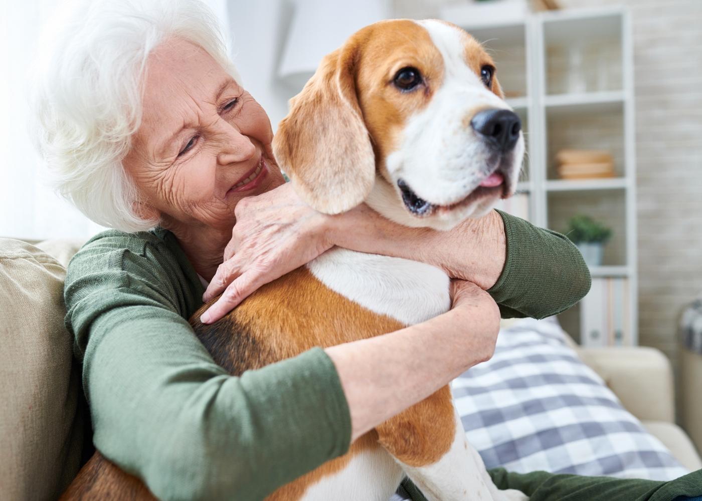 cão em casa de familiar do dono