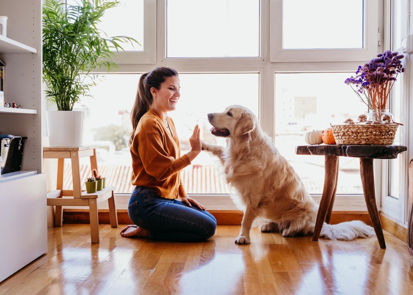 cão a brincar com petsitter