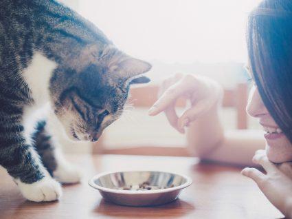 Tutora a incentivar gato a comer porque gato não come