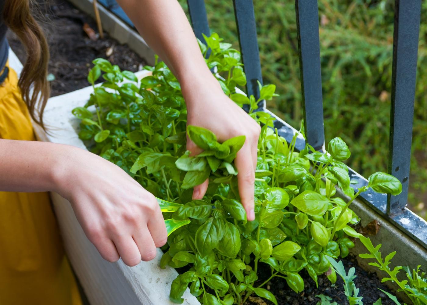 mulher a cuida da horta caseira
