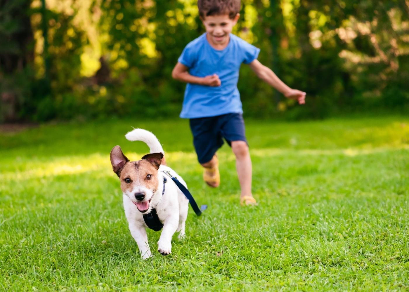 cão a brincar com criança