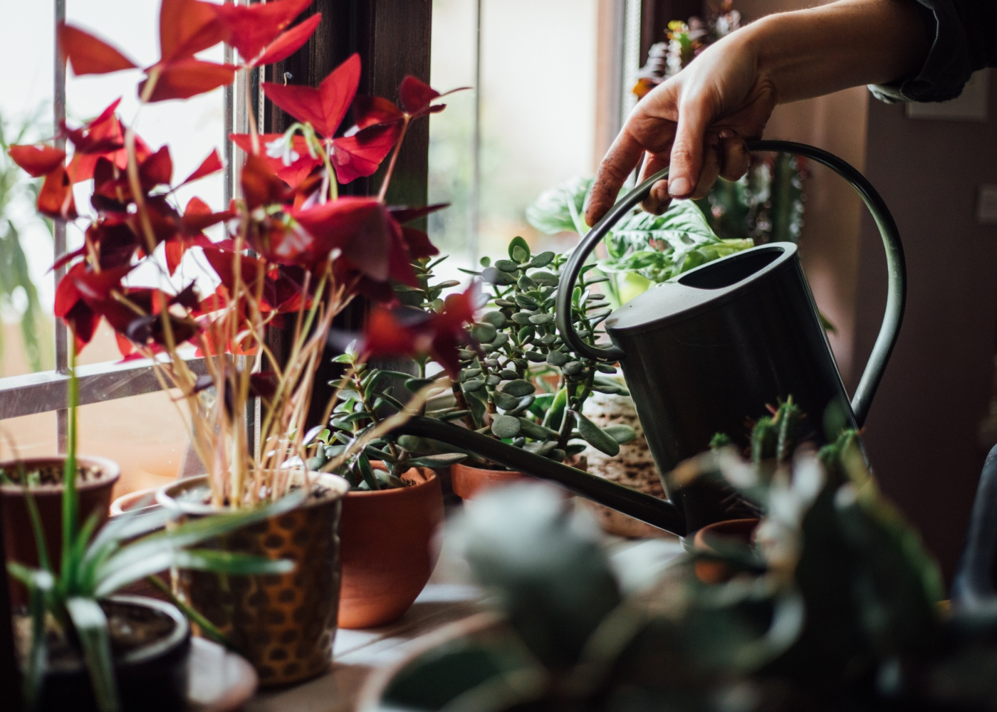 regar as plantas de casa