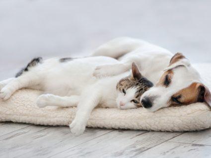 opções para deixar os cães durante as férias