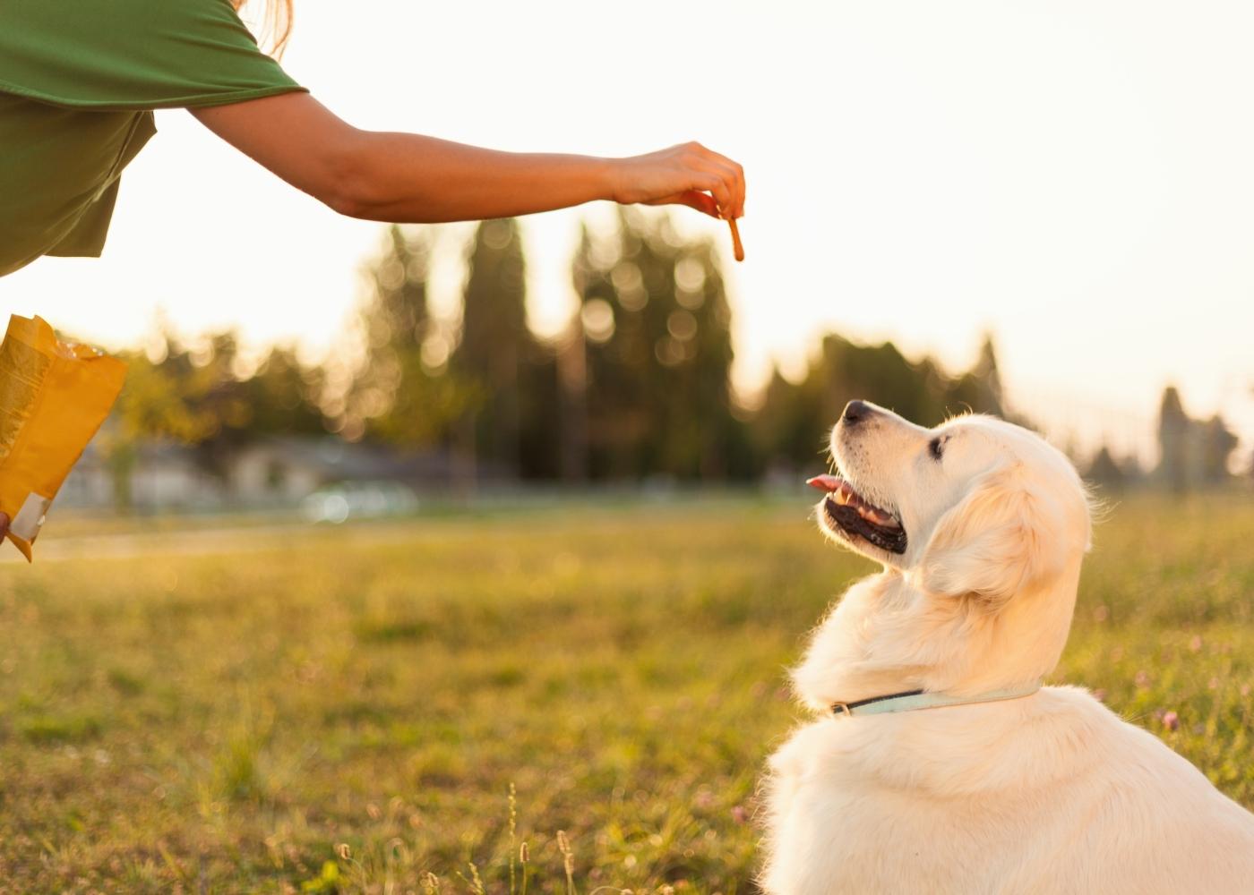 treinar cão a não ladrar