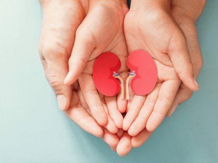 Mãos a segurar maquete de rins