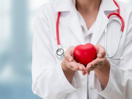 Aterosclerose: médica a segurar maquete de coração