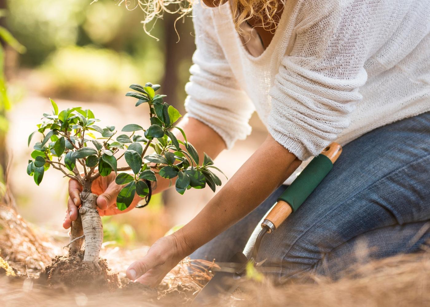 Mulher a plantar árvore