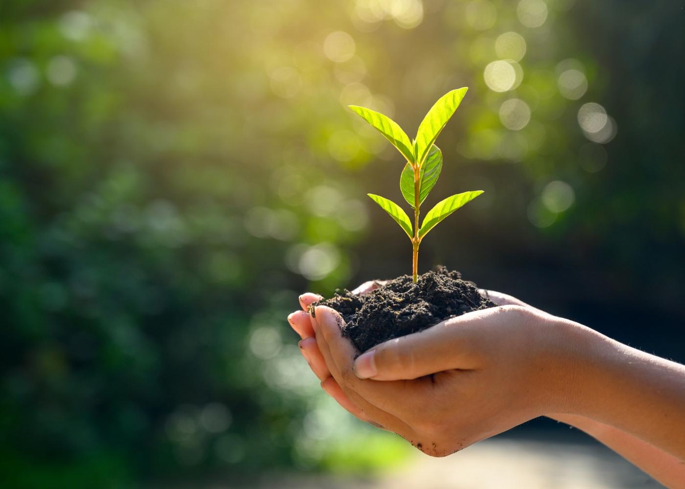 Mulher a plantar uma árvore