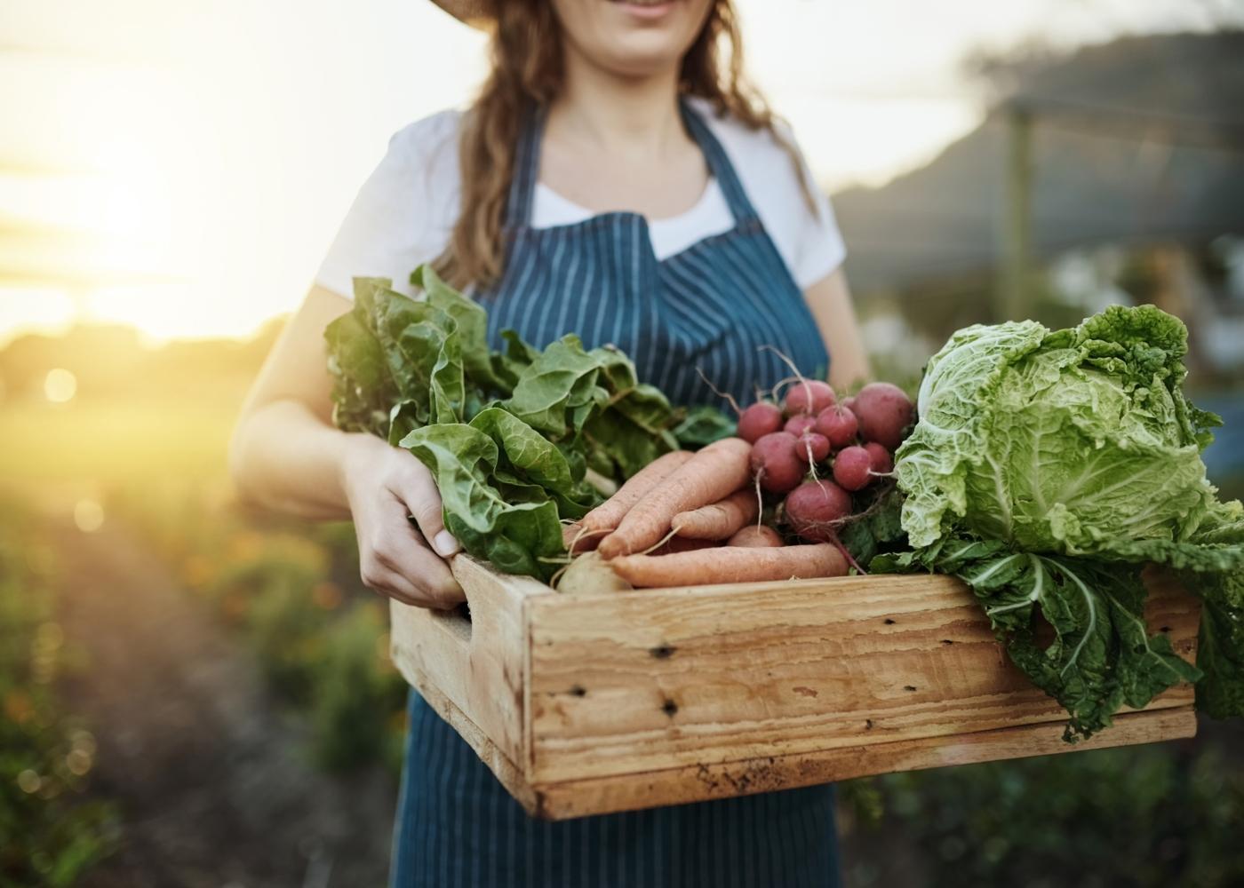 Agricultora a carregar caixa de legumes
