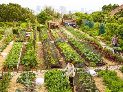 Projeto Food Trails